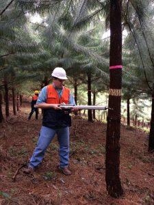 2015_03_SKC_Pine_Hybrids_wood_study - 03