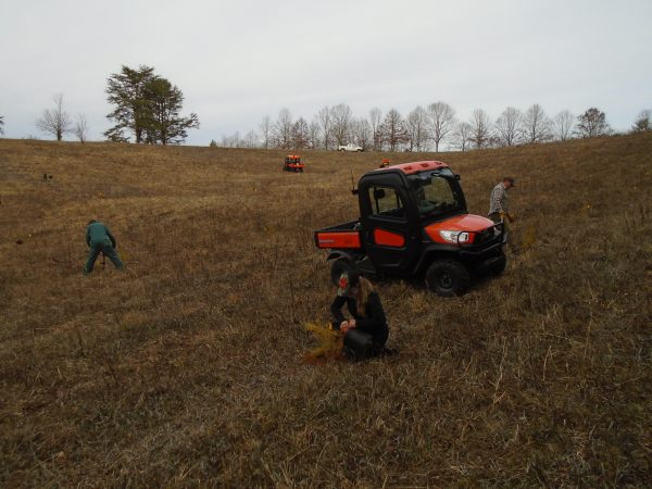 Cheyenne Adamonis planting a table mountain pine at Chilhowee, TN